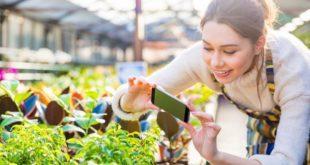 aplicatii de recunoscut plante sau flori